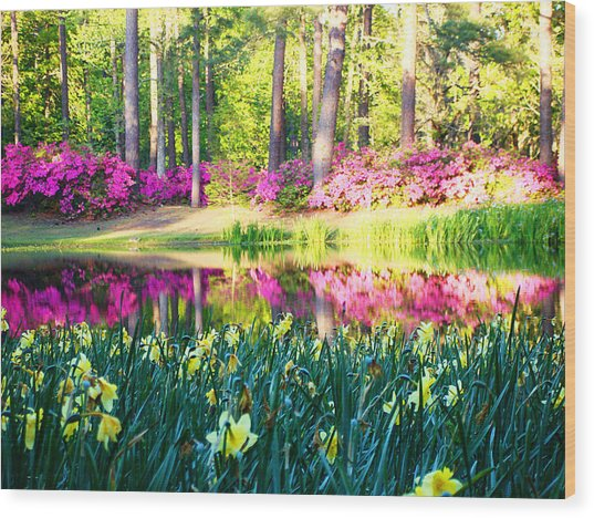 Pink Reflections By Jan Marvin Wood Print