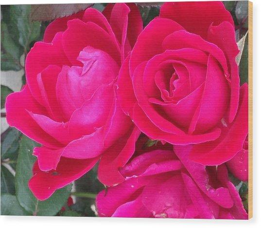 Pink Rose Blossoms Wood Print