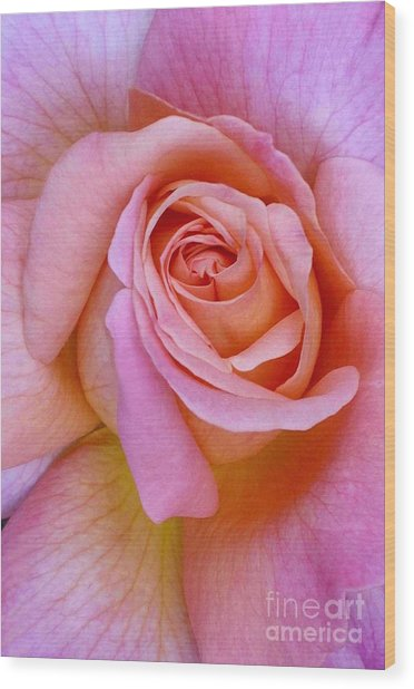 Pink Rose Closeup II Wood Print