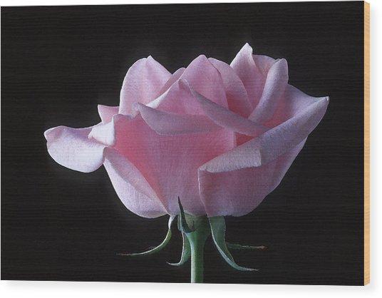 Pink Rose I Wood Print