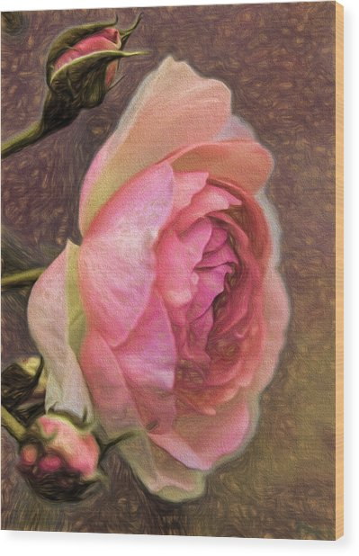 Wood Print featuring the photograph Pink Rose Imp 1 - Artistic Pink Rose With Buddies by Leif Sohlman