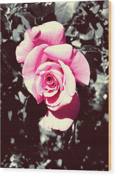 Pink Rosetta  Wood Print