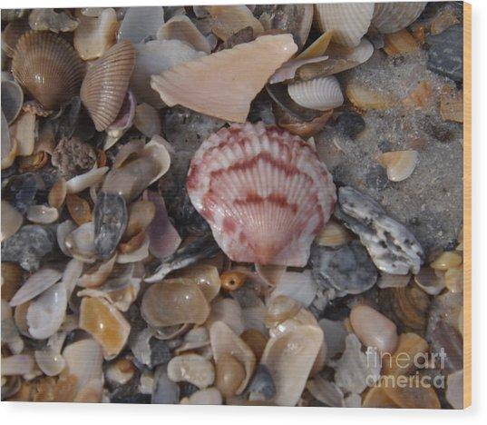 Pink Shell Wood Print