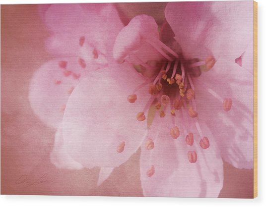 Pink Spring Blossom Wood Print