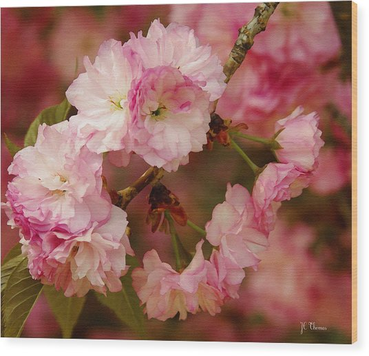 Pink Spring Blossoms Wood Print