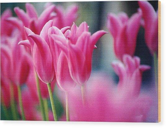 Pink Tulips Wood Print by Susan Crossman Buscho