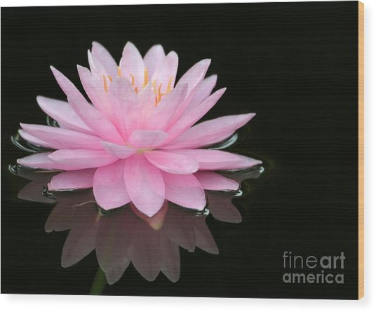 Pink Water Lily In A Dark Pond Wood Print