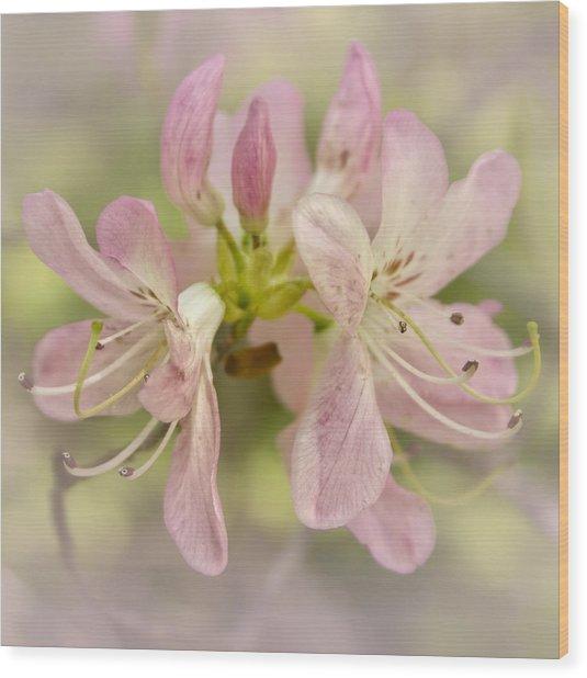Pinkshell Azalea  Wood Print