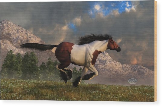 Pinto Mustang Galloping Wood Print