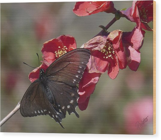Pipevine Swallowtail And Roses Wood Print