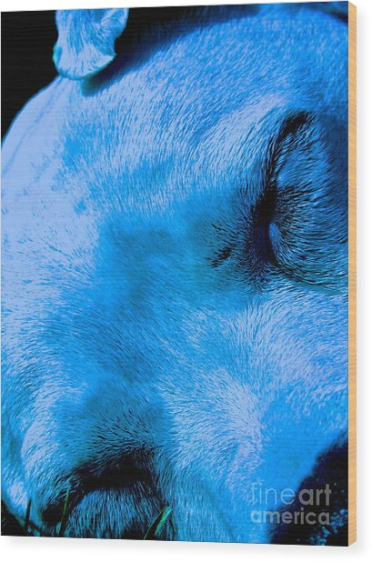 Pit Bull Lullaby// Dream Until Your Dreams Come True Wood Print by Q's House of Art ArtandFinePhotography