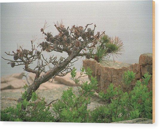 Pitch Pine Wood Print