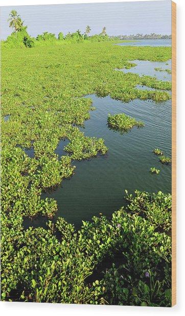 Plant Growth Along The Kumarakom Wood Print