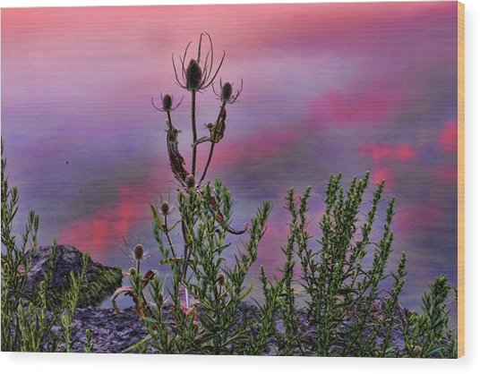 Plant Life By The Water Wood Print