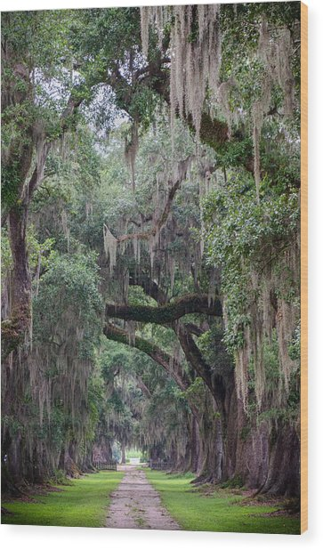 Plantation Path Wood Print