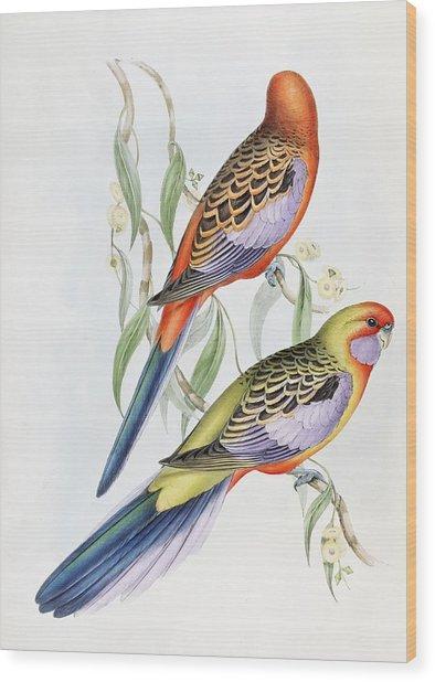 Platycercus Adelaidae From The Birds Of Australia Wood Print