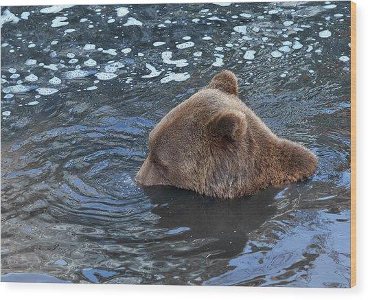 Playful Submerged Bear Wood Print