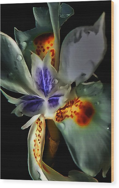 Pleatleaf Flower Wood Print