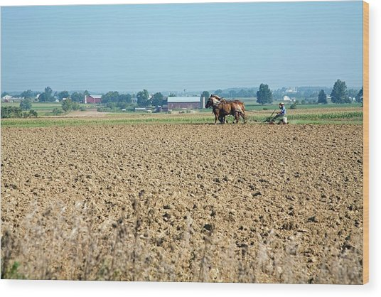 Ploughing On An Amish Farm Wood Print by Jim West