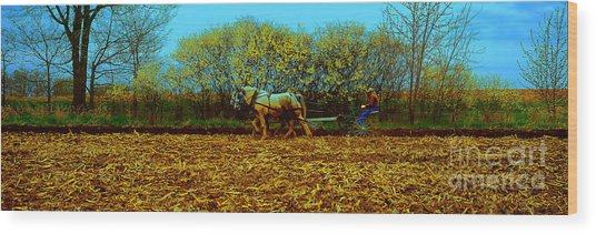 Plow Days Freeport Illinos   Wood Print