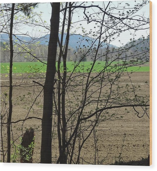 Plowed Wood Print by Catherine Arcolio