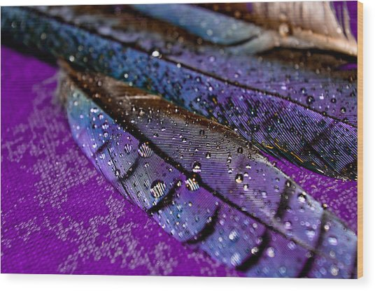 Plum Plumage Wood Print