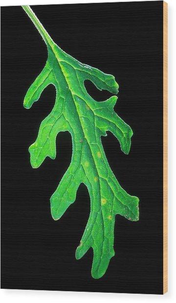 Plum Pox Virus Infection Wood Print