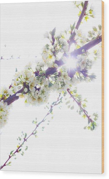 Plum Tree From Heaven Wood Print by Alex Wrenn