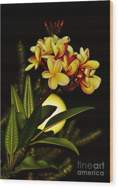 Plumeria On The Full Moon Wood Print