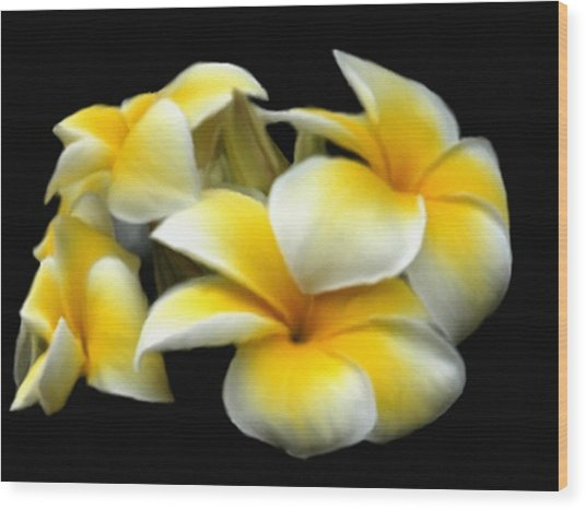Plumeria Yellow And White Wood Print