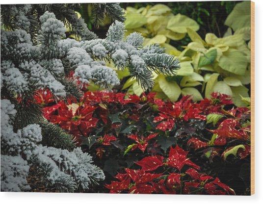 Poinsettia Garden Wood Print