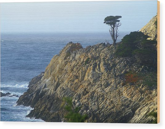Point Lobos Cypress Wood Print