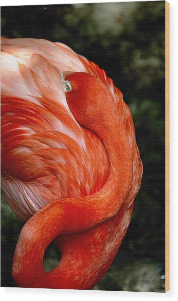 Poised Flamingo Wood Print