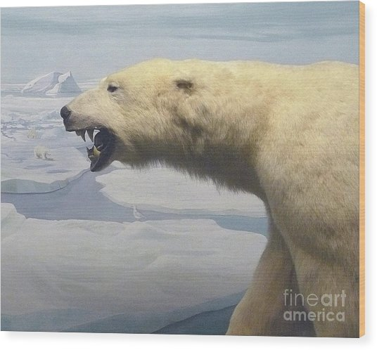 Polar Bear Diorama Wood Print