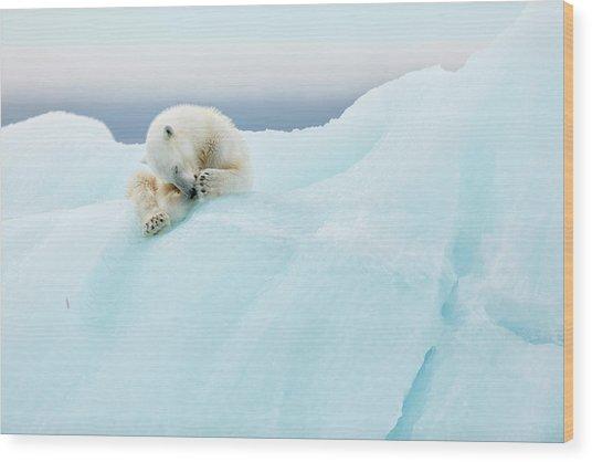Polar Bear Grooming Wood Print