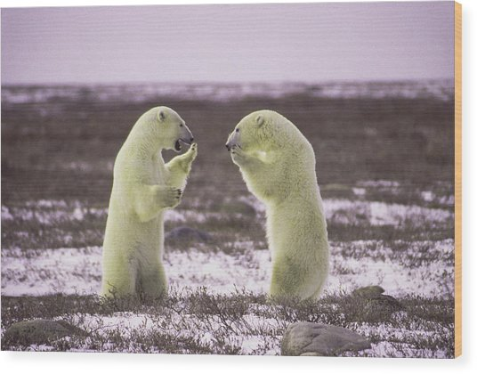 Polar Square Off Wood Print