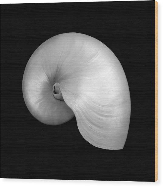 Polished Nautilus Shell Wood Print