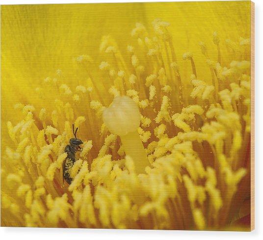 Pollen Forest Wood Print