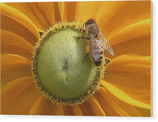 Pollen Time Wood Print