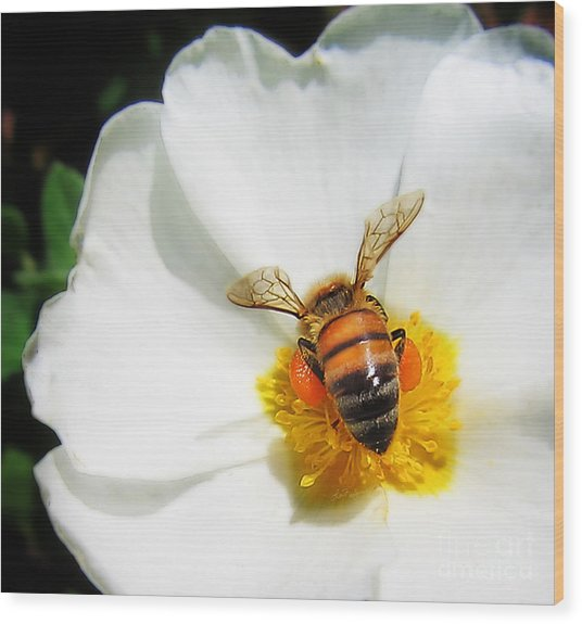 Pollinating Wood Print