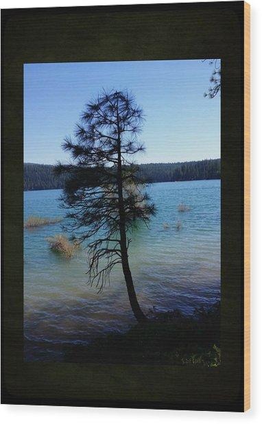 Pollock Pine Wood Print