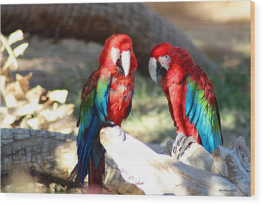 Polly And Pauly Wood Print by Dick Botkin