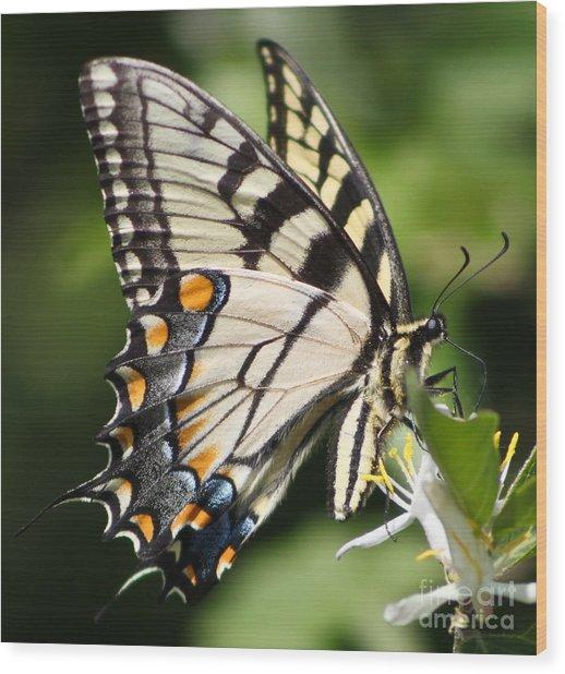 Polychromatic Beauty Wood Print