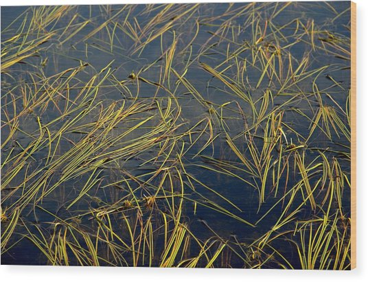 Pond Grass Wood Print by Marv Russell
