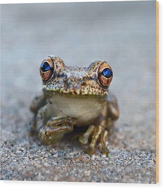 Pondering Frog Wood Print