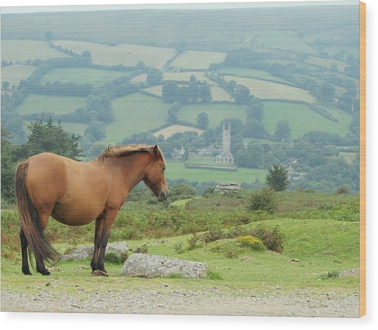 Pony Atop Hill Wood Print by Jf Halbrooks