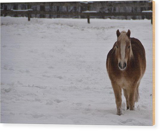 Pony In Snow Wood Print by Nickaleen Neff