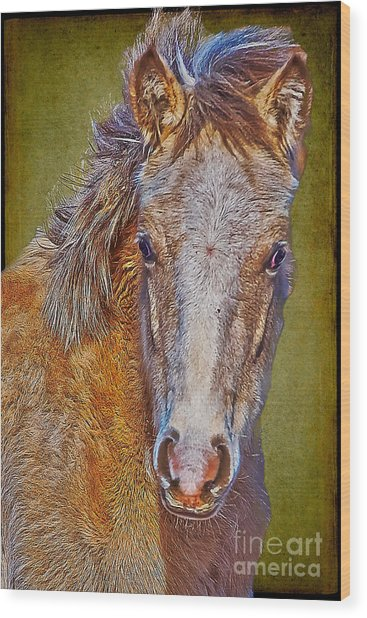 Pony Portrait  Wood Print