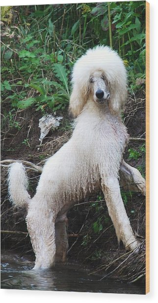 Poodle In The Forest Wood Print