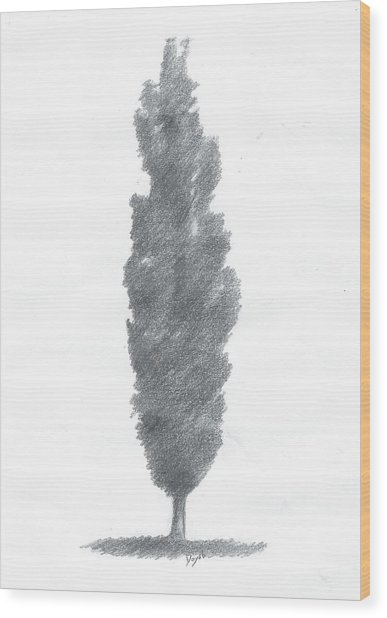 Poplar Drawing Number One Wood Print by Alan Daysh